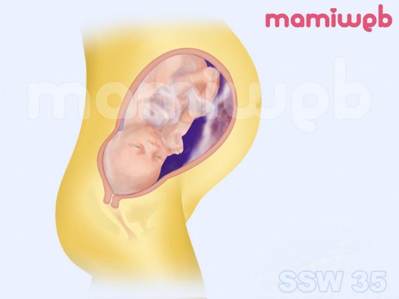 35. Schwangerschaftswoche (35. SSW) - Mamiweb.de