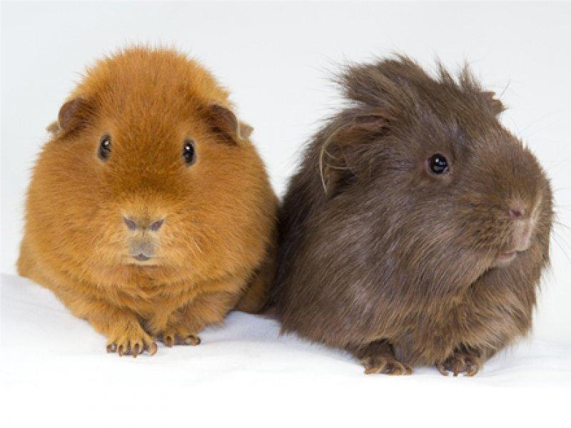 Fünf Beliebte Haustiere Mamiwebde