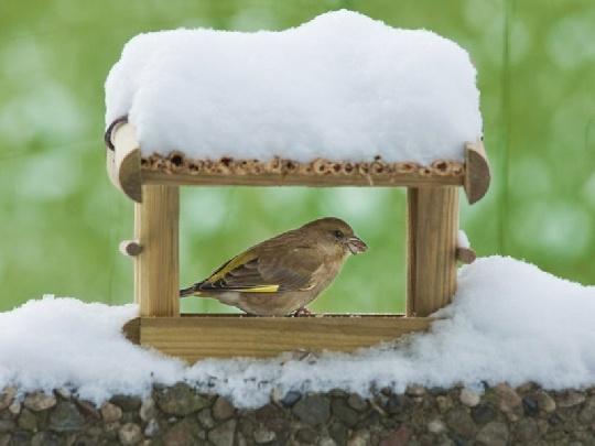 vogelfutter im vogelhaus darauf solltest du achten. Black Bedroom Furniture Sets. Home Design Ideas