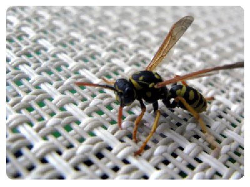 Wespenstich Schwanger