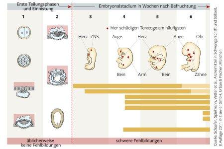 Schäfer, Spielmann, Vetter, Elsevier GmbH