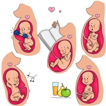 baby schluckauf im mutterleib