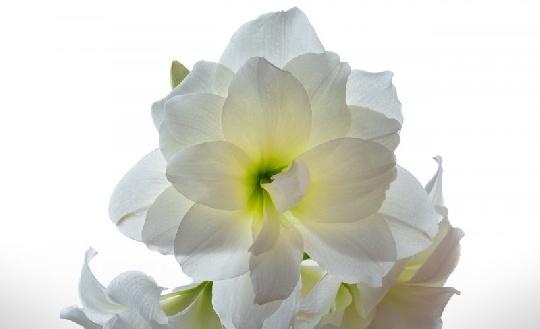 Giftige zimmerpflanzen vergiftung vermeiden - Giftige zimmerpflanzen ...