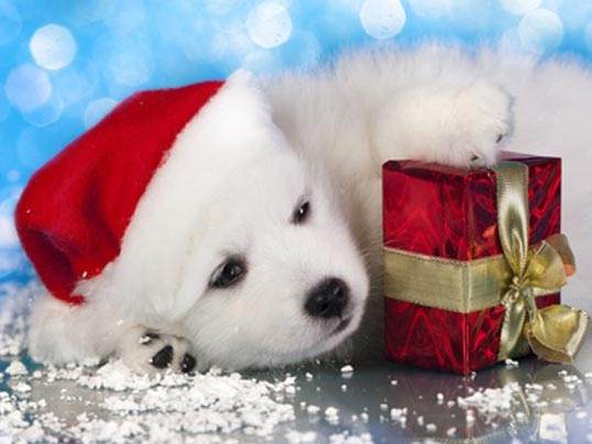 hund-mit-geschenk