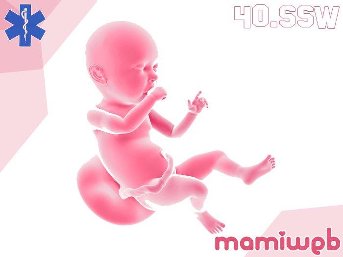 40-schwangerschaftswoche