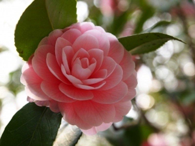 Lasst Blumen Sprechen Mamiwebde