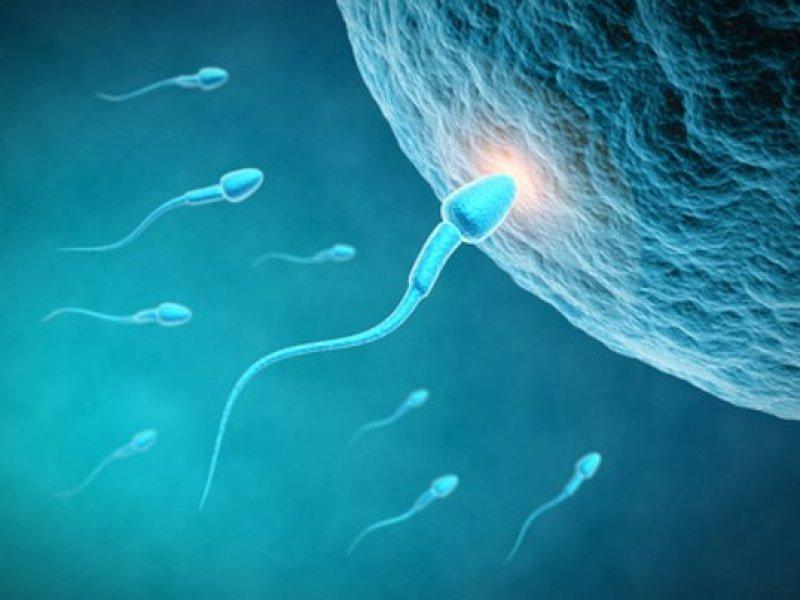 spermazelle-eizelle