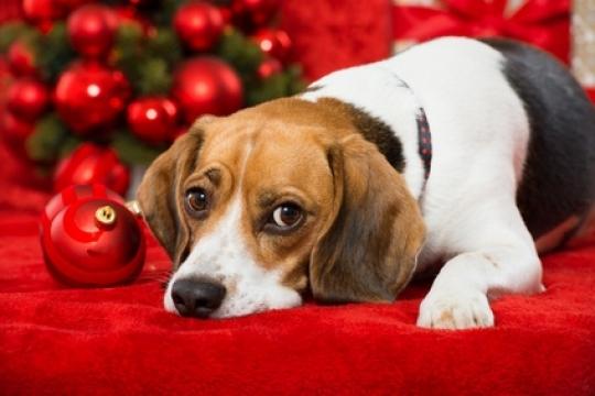 hund-unterm-weihnachtsbaum