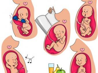 Die motorische Entwicklung in der Schwangerschaft